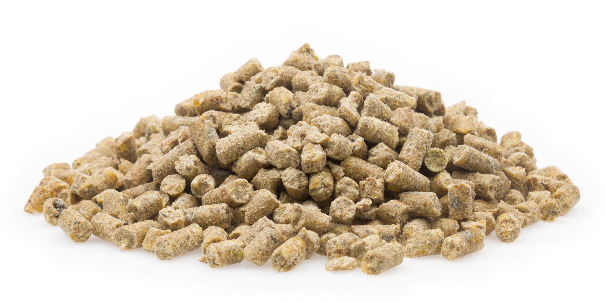 Bio Vollkraftkorn Premium